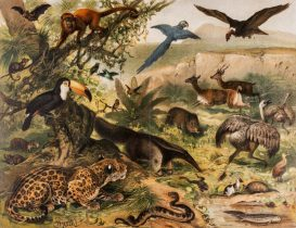 neotropical-fauna-antique-lithograph-1896-illustration-istock